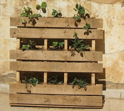 pallet planter vertical