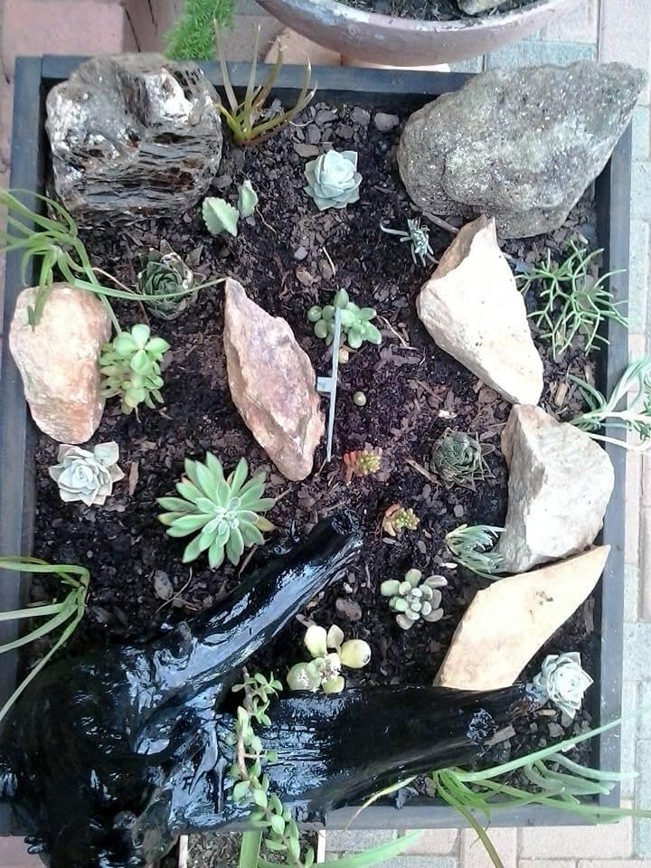 Gorgeous pallet succulent planter