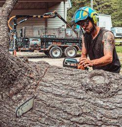 Understanding the Responsibilities of an Arborist1