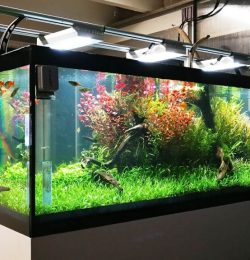 Top Tips For Maintaining Aquariums In Your Home The Right Way